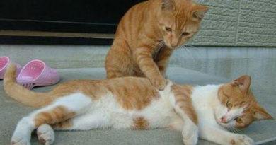 kedi hasta, Kediler de hastalanır