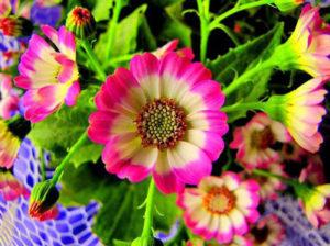Çözülemeyen sır: Bitkilerdeki biyolojik saat