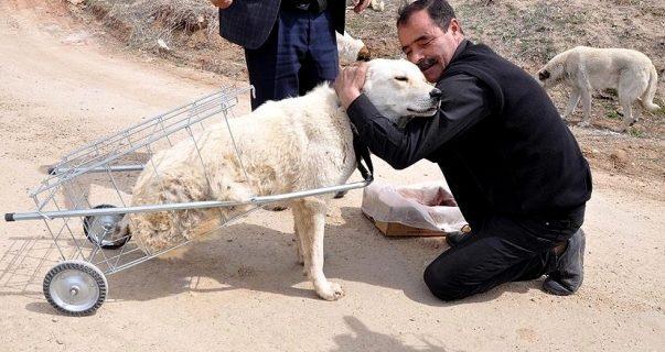 Felçli köpeğe, pazar arabasından yürüteç