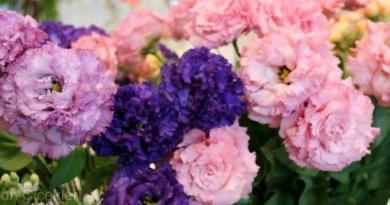 Çiçekler ve Süs Bitkileri güzelliğiyle görenleri büyüledi