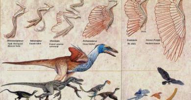 Evrim nedir ne değildir?