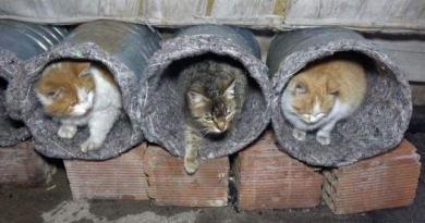 Eski su bidonlarını kedi yuvası yaptılar